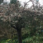 Baby doves, commitment and a cherry tree